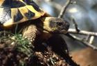 Gonfaron - tortoise village