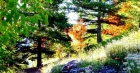 Arboretum de Marcel Kroenlein