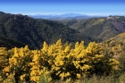 Massif Tanneron – Mimosa Route