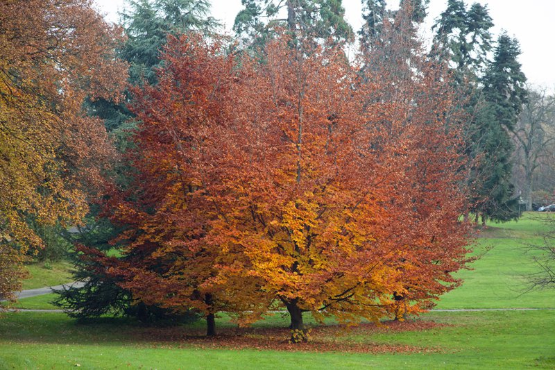 Tourisme et voyage genve visiter genve monuments et for Jardin anglais geneve programme
