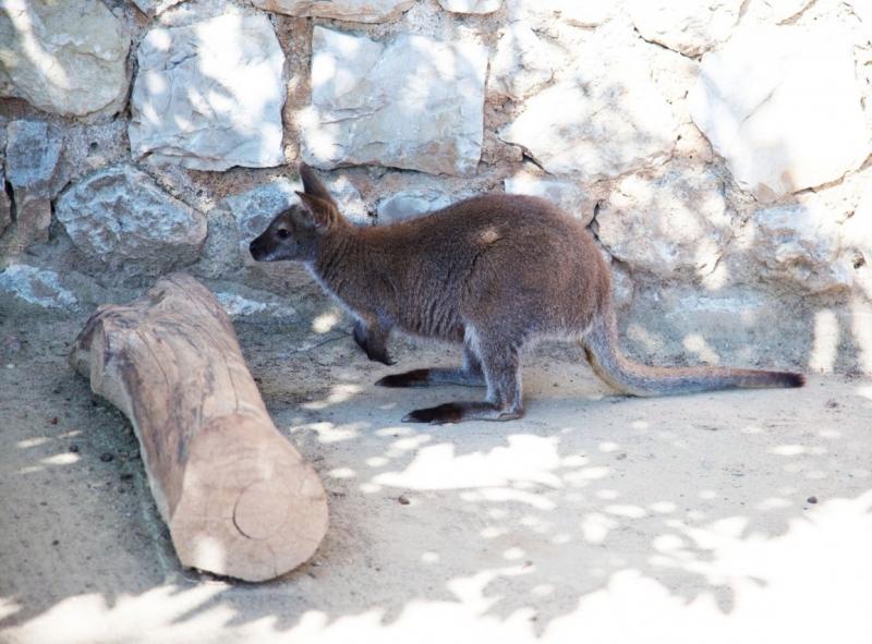 Jardin animalier turismo monaco for Jardin animalier monaco