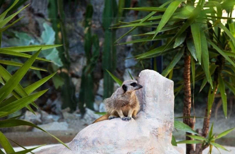 Jardin animalier tourisme monaco for Jardin animalier monaco